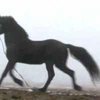Crescătoria de cai din Ceadîr-Lunga